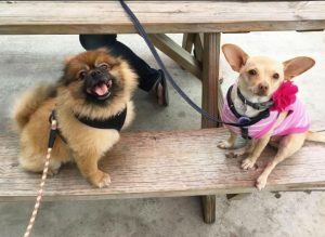 Yappy Hour returns to H&G! @ Hops and Grain   Austin   Texas   United States