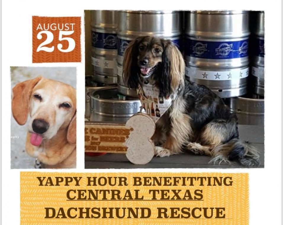 yappy hour woof with central texas dachshund rescue atx social pup