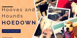Hooves and Hounds Hoedown @ My Love Fur Paws pet Care | Austin | Texas | United States